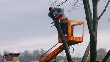 Taille des arbres, élagage