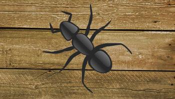 Traitement Termites