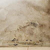 moisissure sur mur