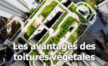 avanatges d'une toiture végétalisée