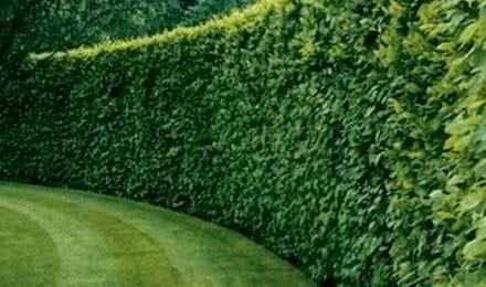 clôture vivante