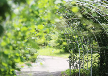 exemple allée de jardin privé