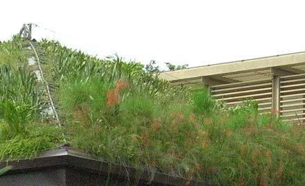 exemple de toit végétal