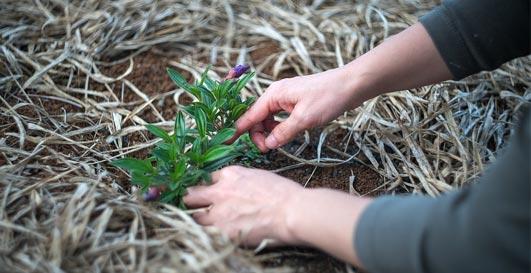 jardinier plante fleurs