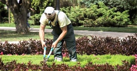 exemple d'activité d'un jardinier : taille des fleurs