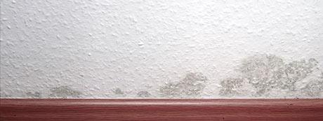 moisissures siur un mur