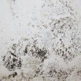 moisissures sur un mur