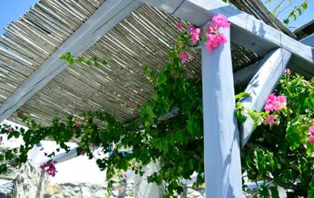 plantes qui poussent sur une pergola