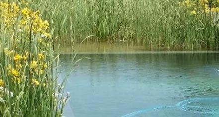 exemple de piscine naturelle
