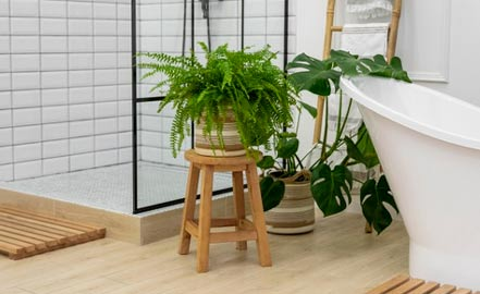 plantes de salle de bains