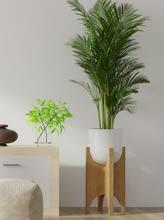 plantes pour l'intérieur de la maison